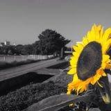 写真の色を強調して、オシャレに加工できるiPhoneアプリ「Color Range」