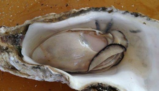 美味しい牡蠣が安く食べられる、福岡・糸島の牡蠣小屋「豊久丸」に行ってきた!