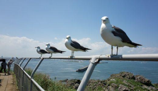 凄まじい数のウミネコが壮観な青森県八戸市の「蕪島」に行ってきた!