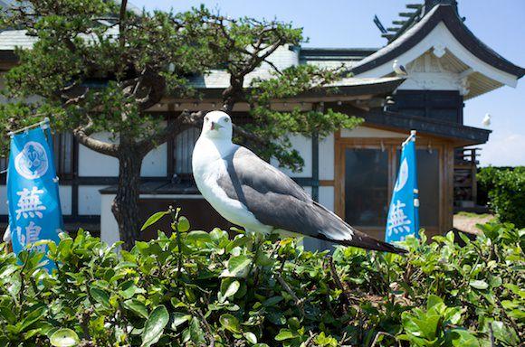 Kabushima 16