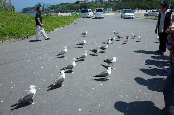 Kabushima 2