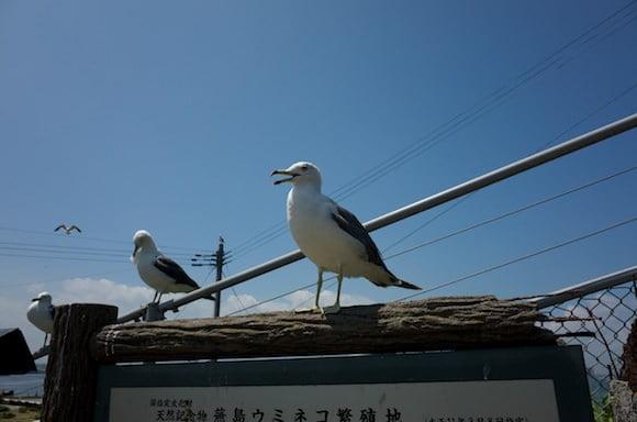 Kabushima 7
