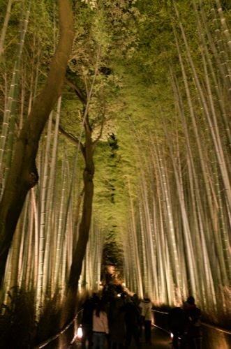 Arashiyama hanatoro 6