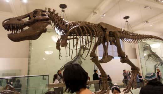 映画「ナイトミュージアム」の舞台にもなったアメリカ自然史博物館写真レポ。大迫力のティラノサウルス骨格標本も!