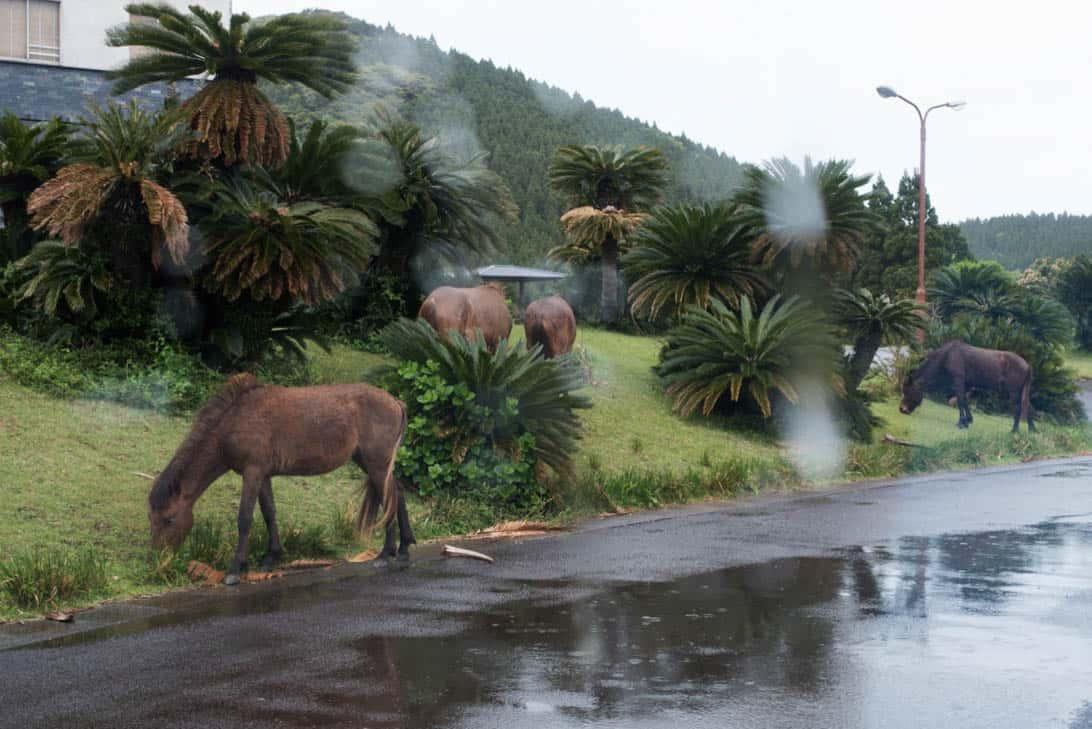 Toimisaki wild horse 1