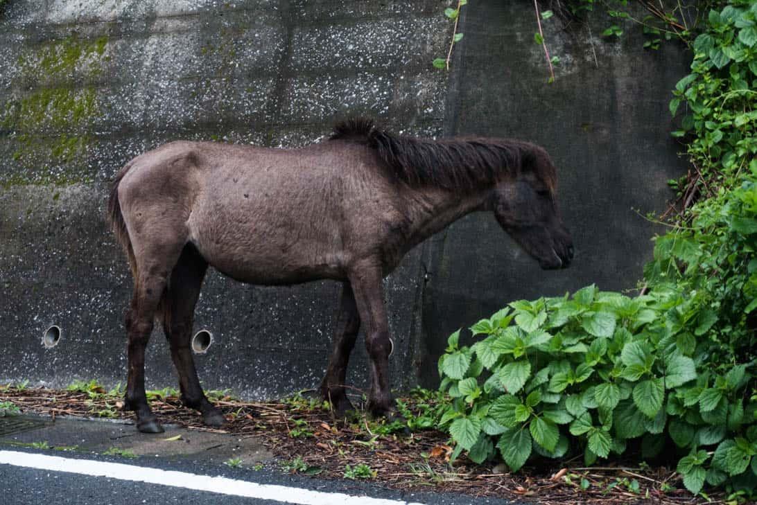 Toimisaki wild horse 11