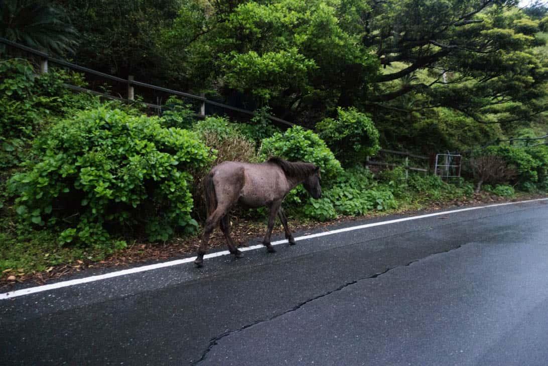 Toimisaki wild horse 12