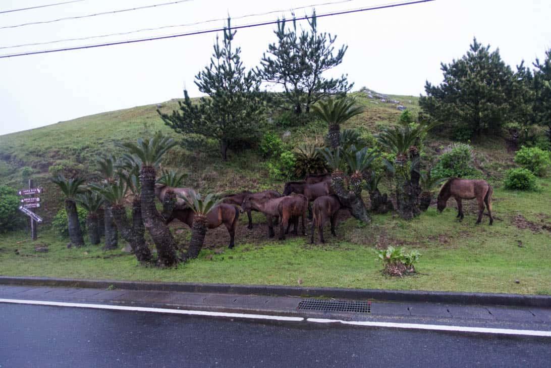 Toimisaki wild horse 13