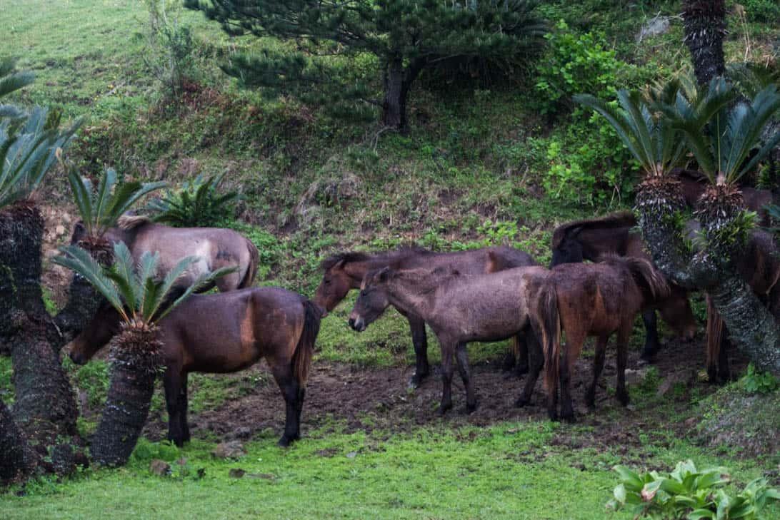 Toimisaki wild horse 14