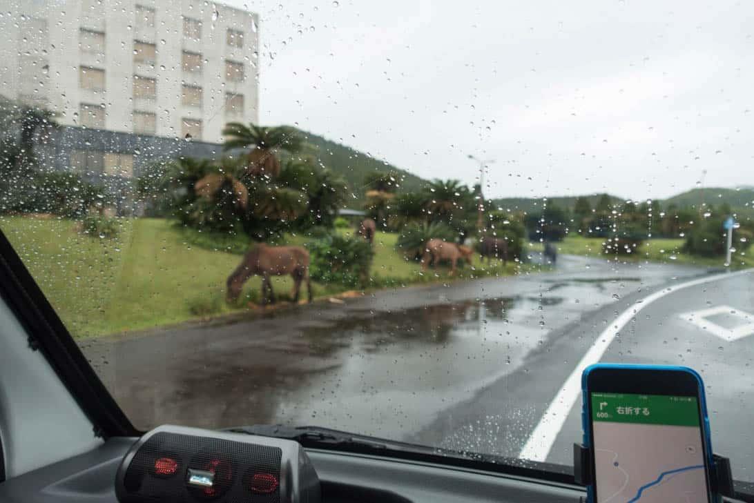 Toimisaki wild horse 2