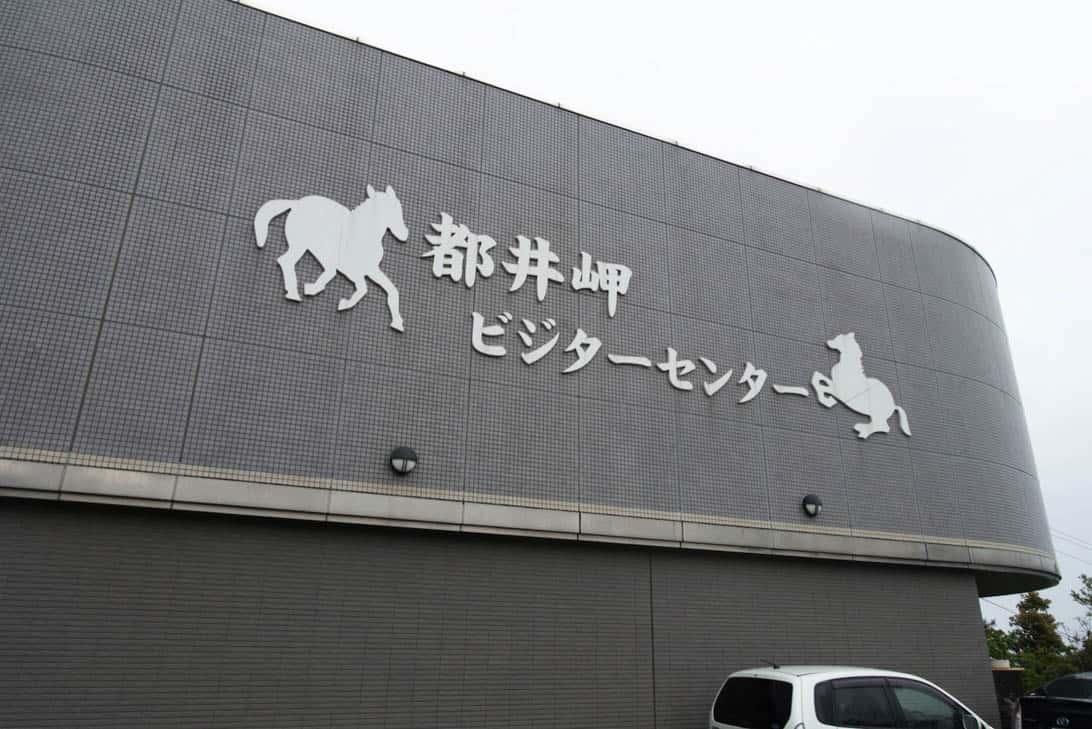 Toimisaki wild horse 3