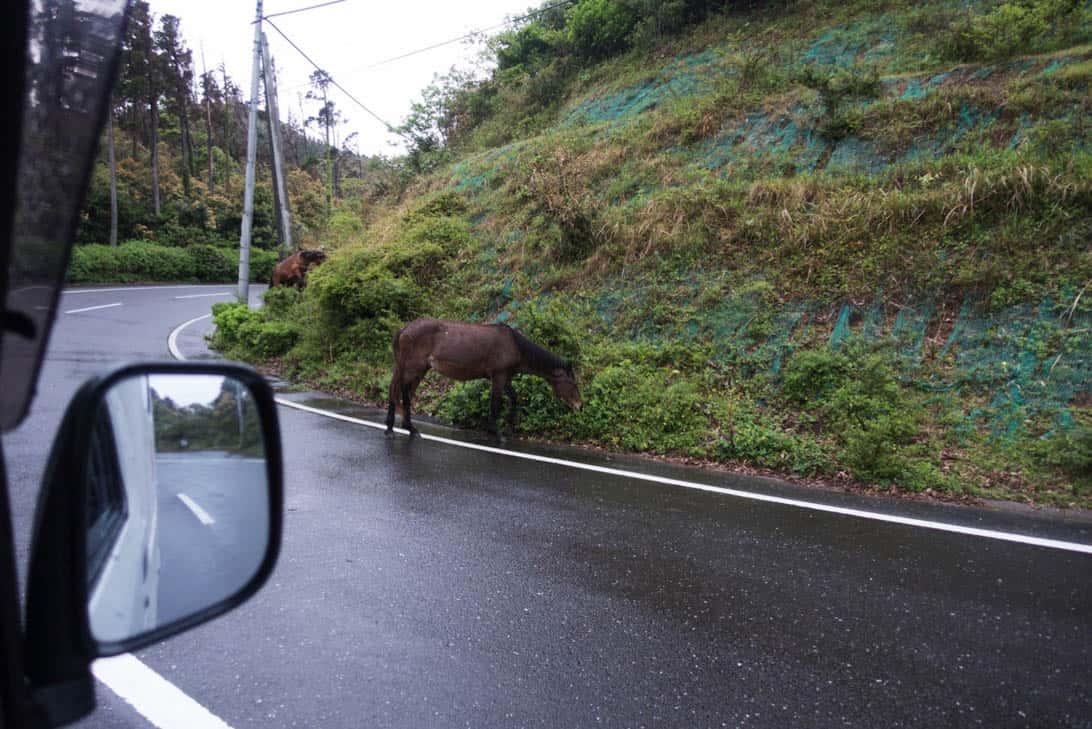 Toimisaki wild horse 8