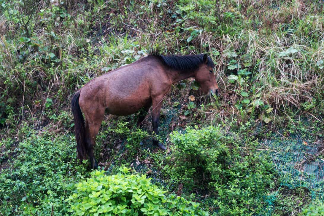Toimisaki wild horse 9