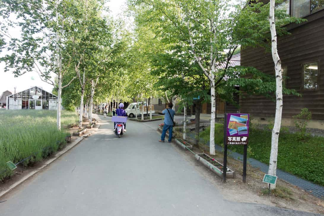 Hokkaido lavender 19
