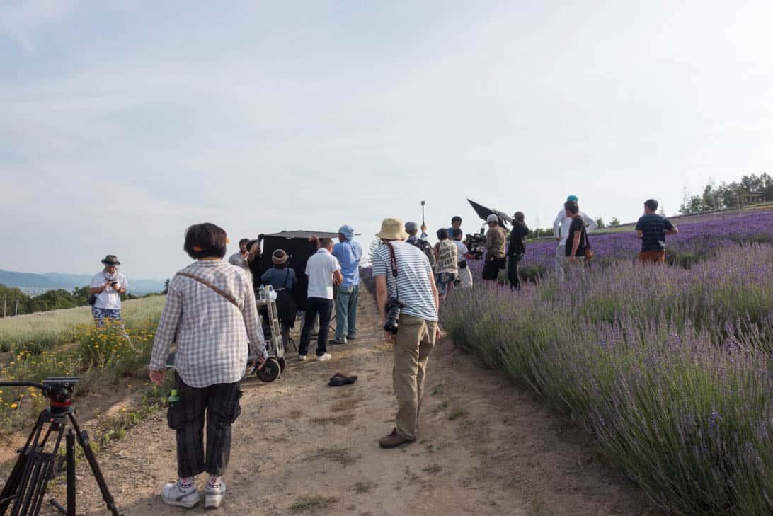 Hokkaido lavender 24