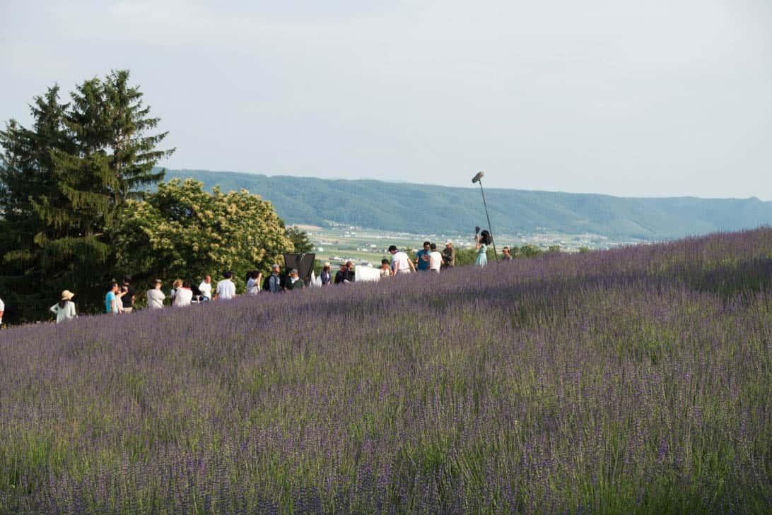 Hokkaido lavender 27