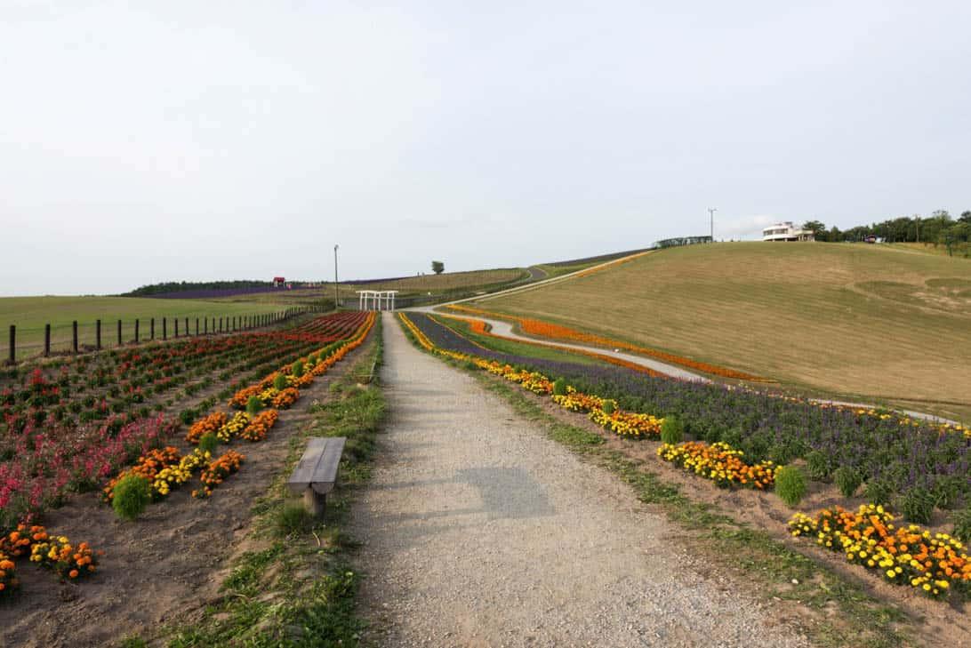 Hokkaido lavender 29
