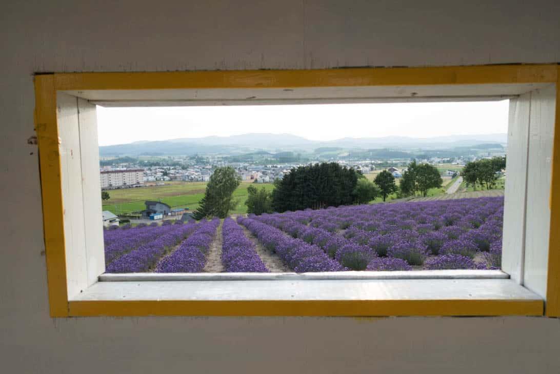 Hokkaido lavender 32