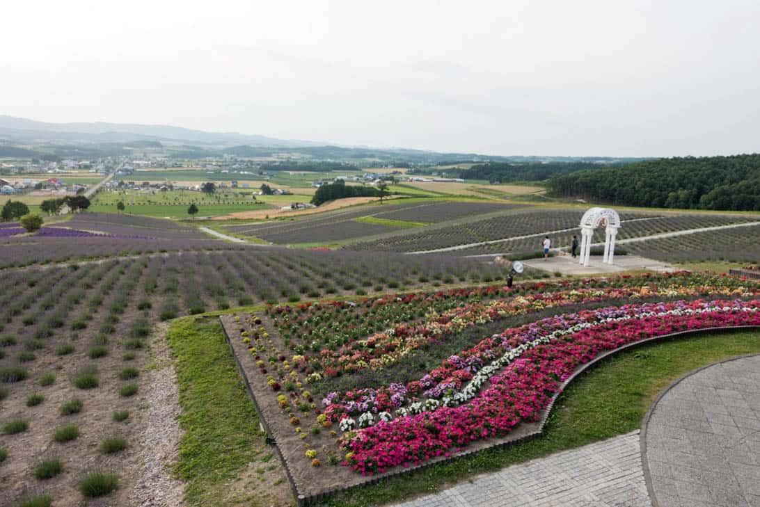 Hokkaido lavender 34