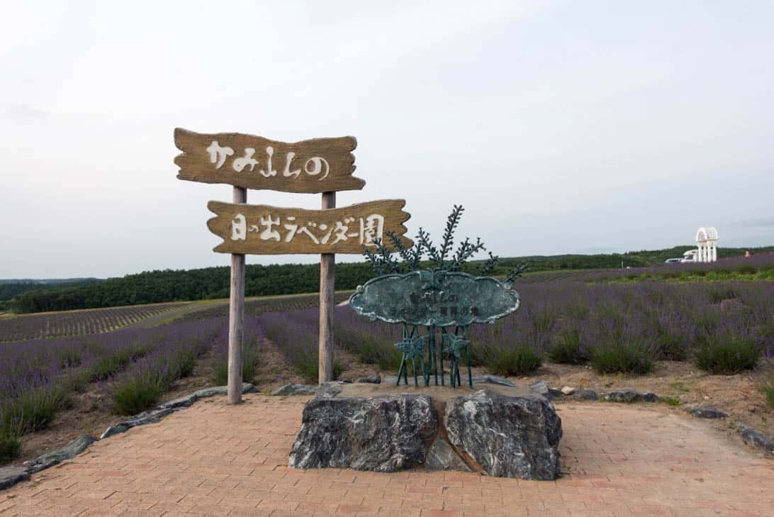 Hokkaido lavender 35