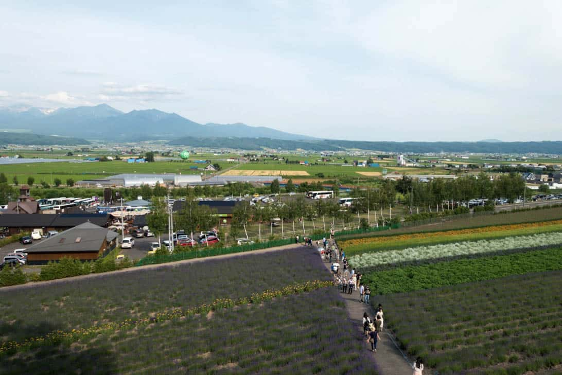 Hokkaido lavender 6