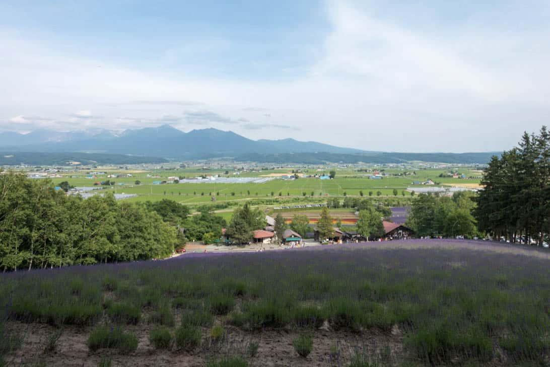 Hokkaido lavender 9