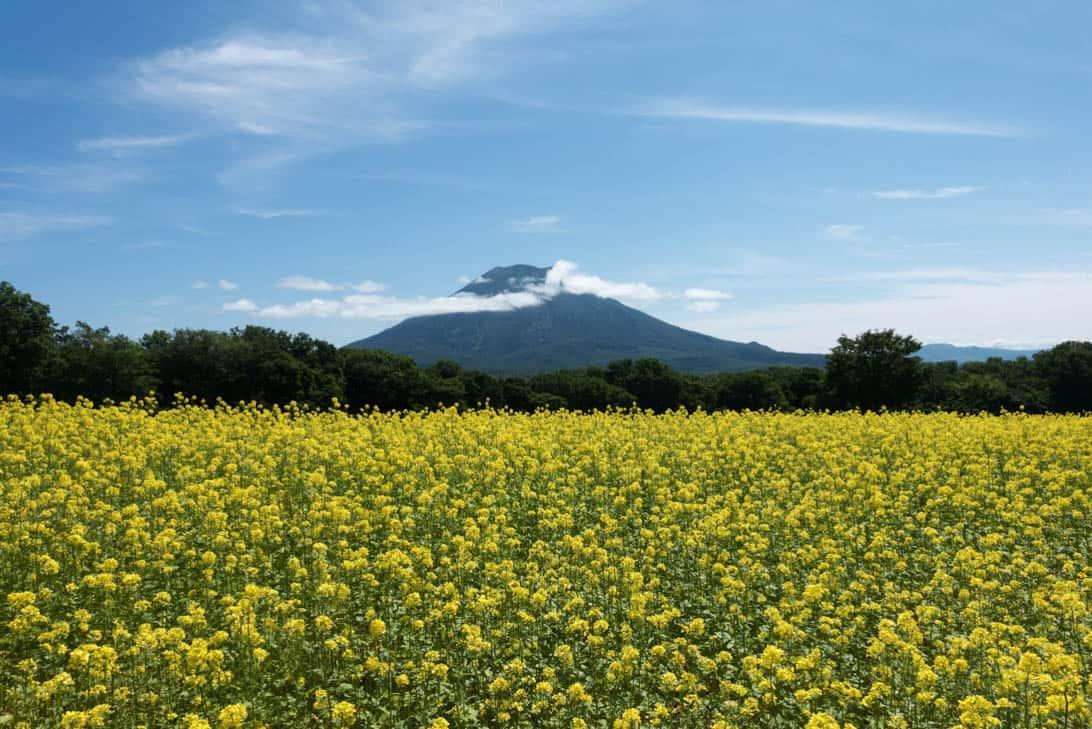 Takahashi farm 11