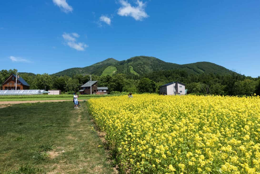 Takahashi farm 13