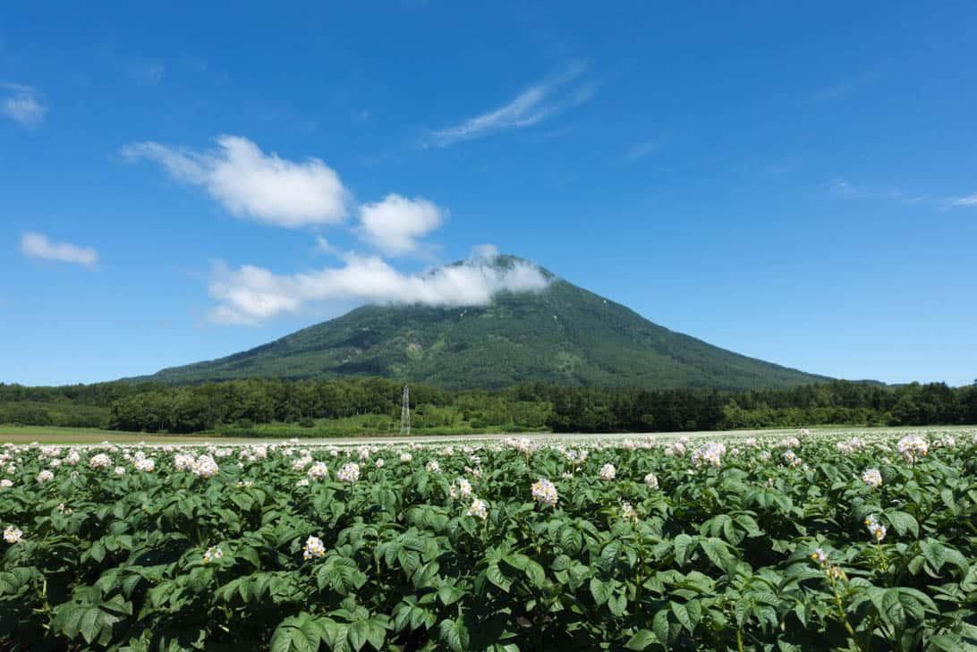 Takahashi farm 3