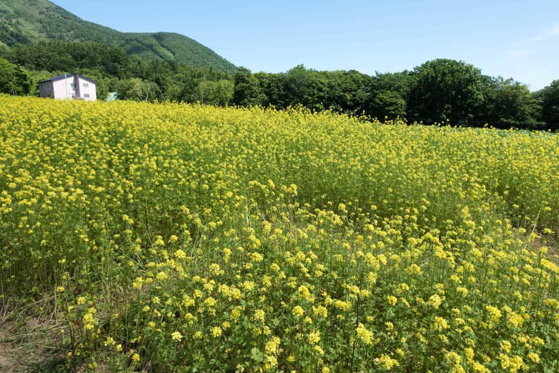 Takahashi farm 9