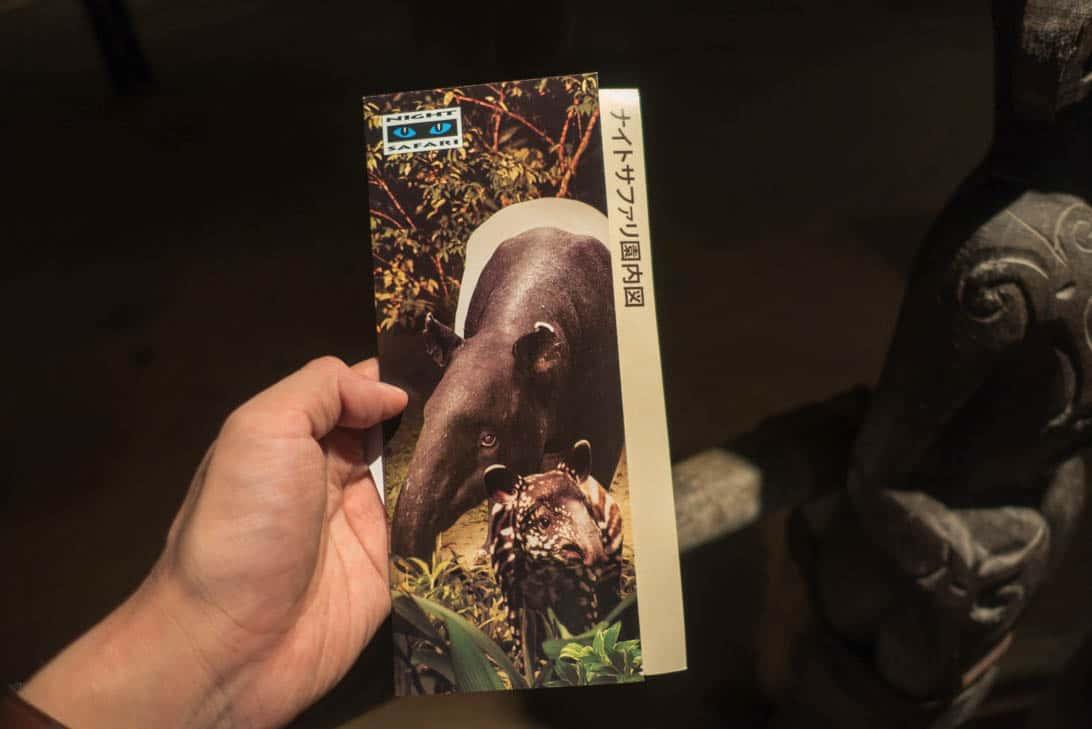 Night safari 10