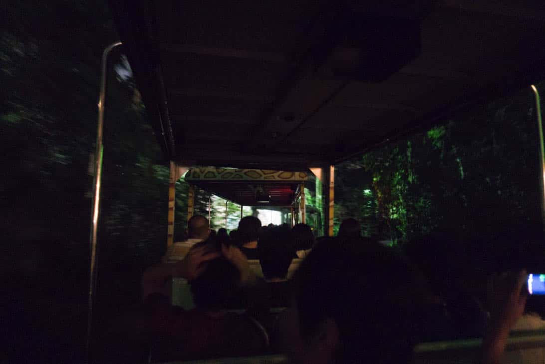Night safari 12