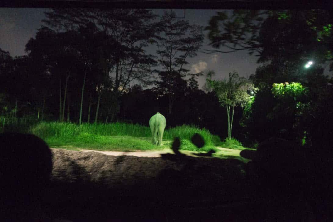 Night safari 14