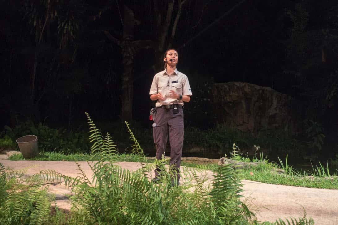 Night safari 19