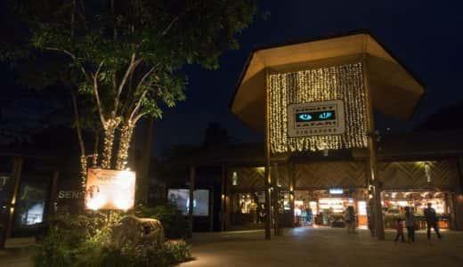 シンガポールに行ったら絶対行きたい「ナイトサファリ」普段見られない夜の動物たちの生態を観察してみよう