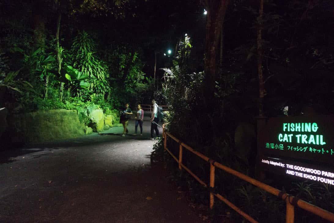Night safari 24