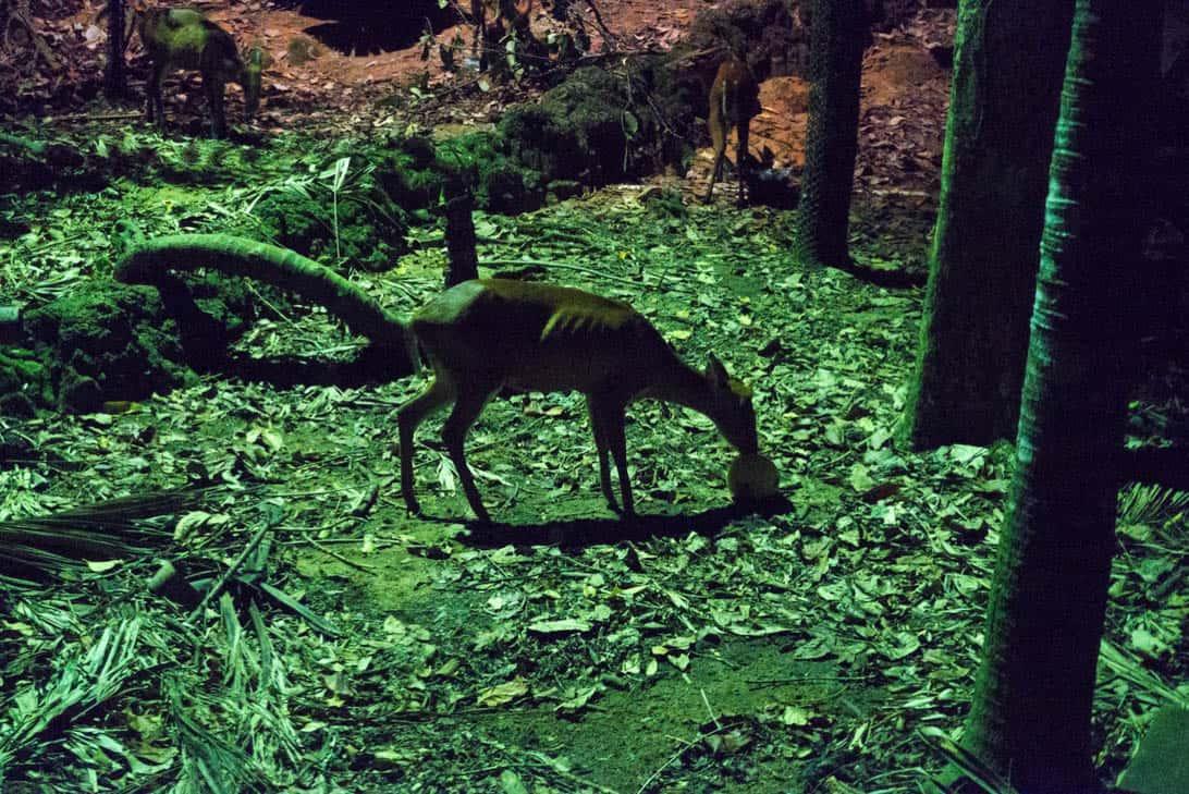 Night safari 25