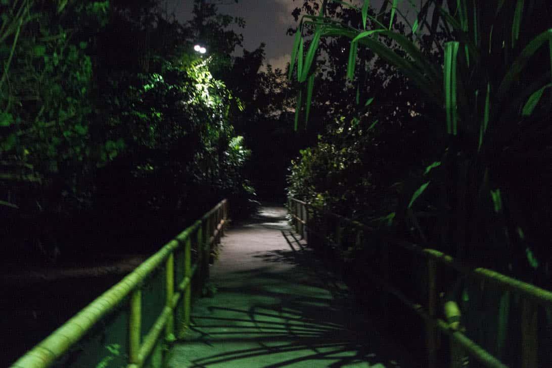 Night safari 27