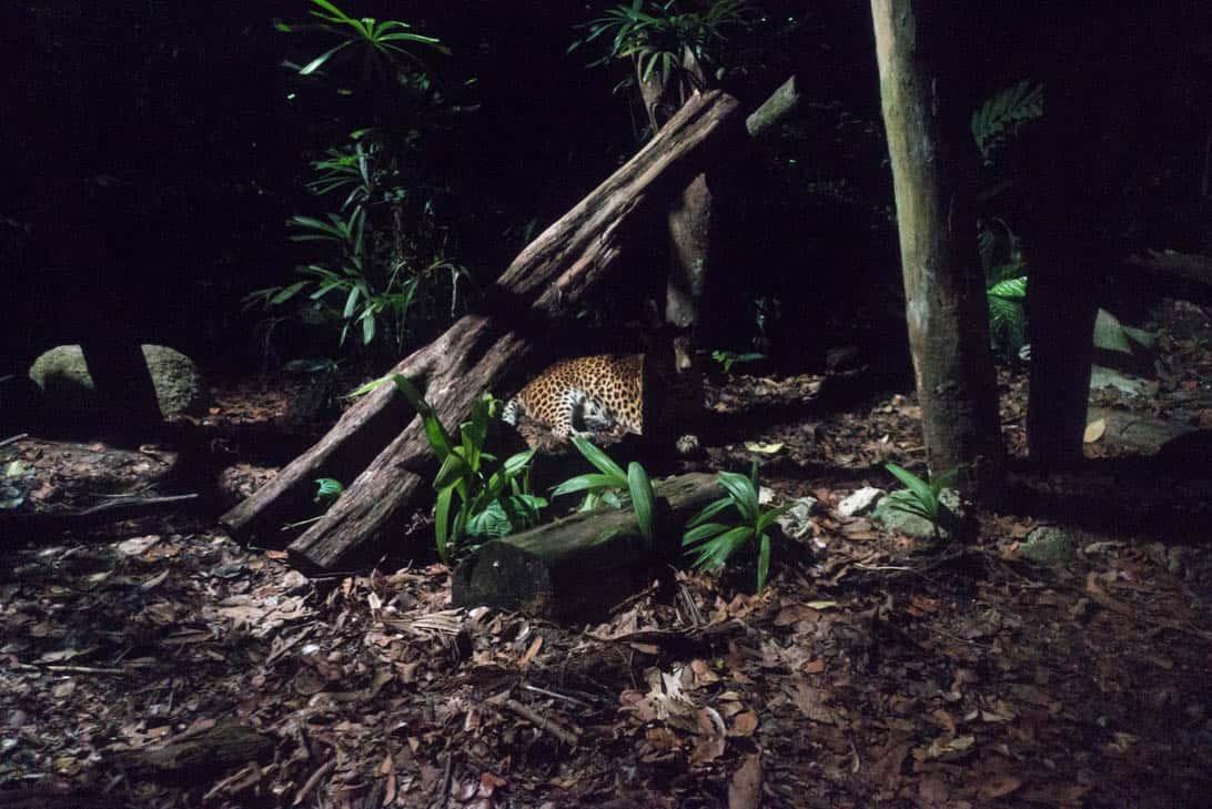 Night safari 29