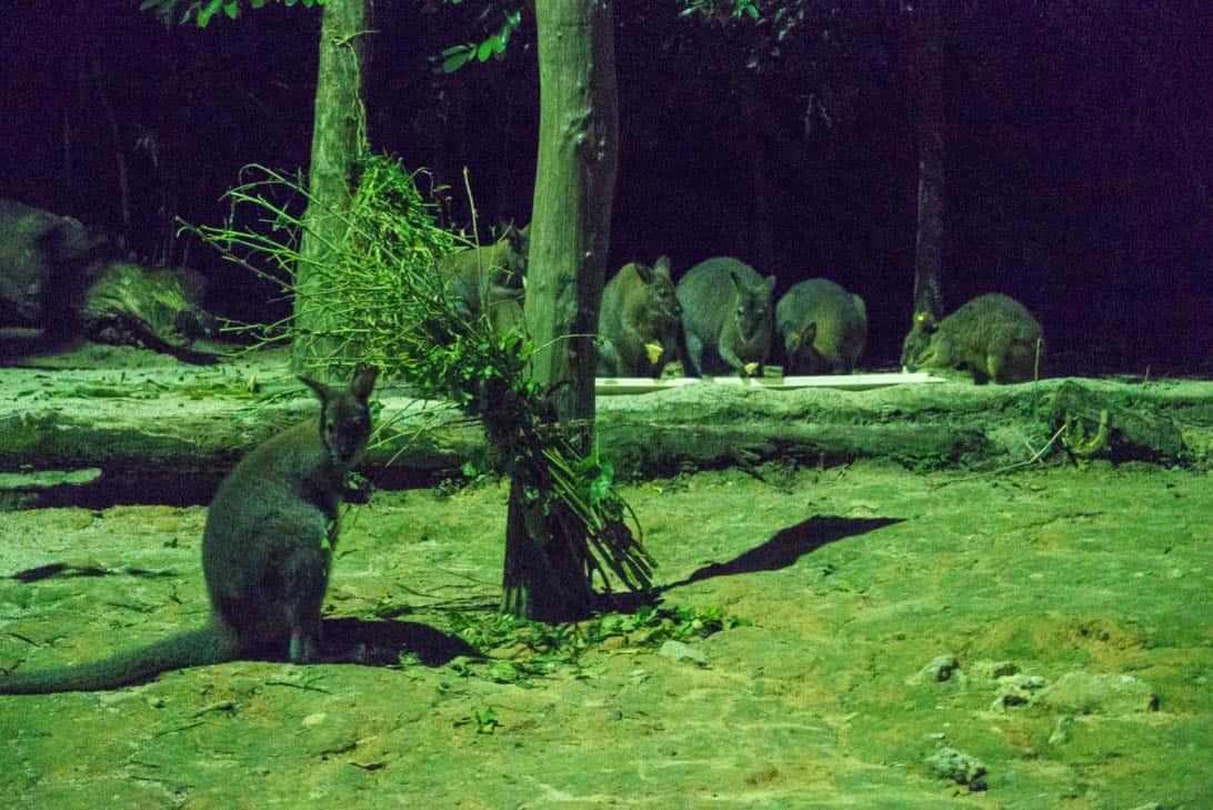 Night safari 32