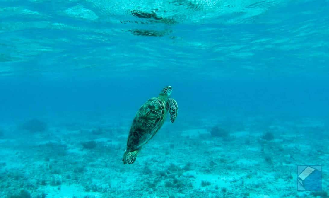 Zamami island sea 26