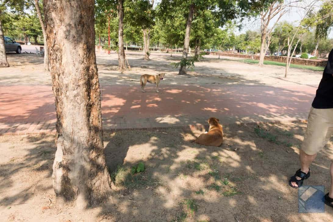 Ayutthaya ruins thailand 21