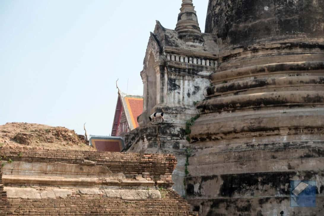 Ayutthaya ruins thailand 34