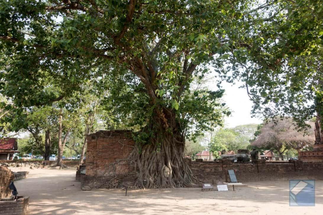 Ayutthaya ruins thailand 41