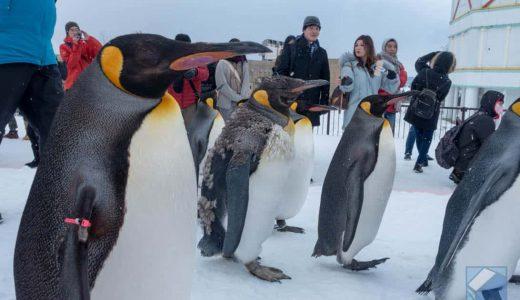 冬の旭山動物園「ペンギンの散歩」がかわいすぎたので動画と写真を見てくれ