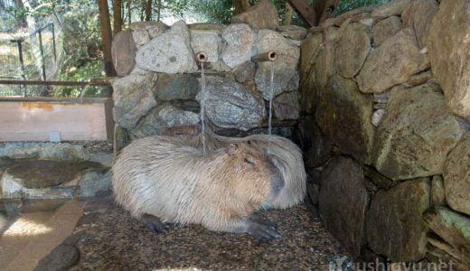 長崎バイオパークは動物が近い!冬はカピバラの露天風呂でほのぼのするふれあいの動物園