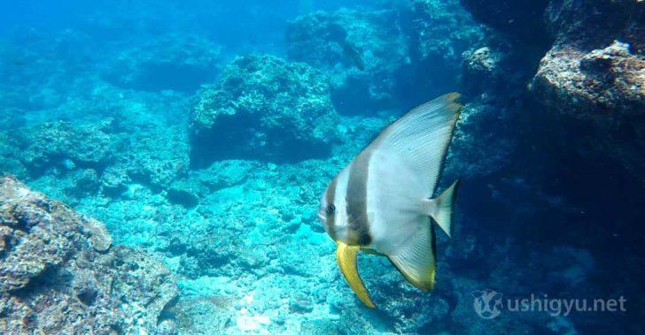 GoPro HERO5 水中撮影1