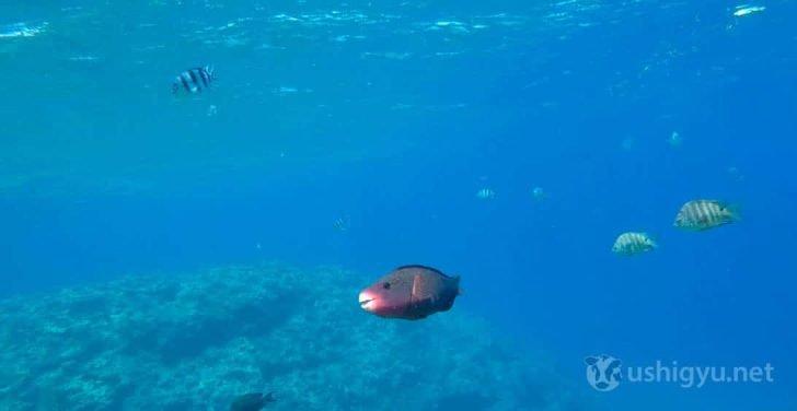 GoPro HERO5 水中撮影3
