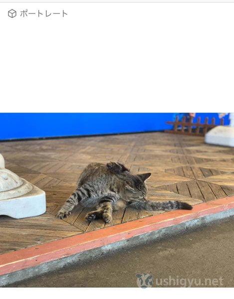 猫の写真でf値の変更を試す