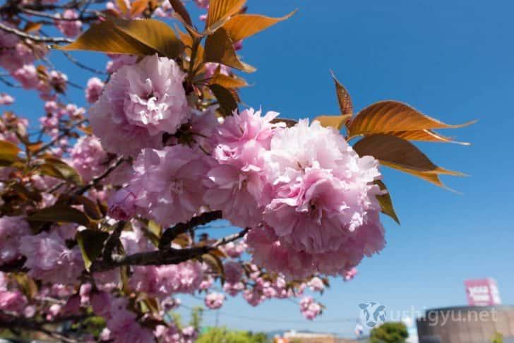 駐車場周辺にはきれいな花も咲いていました